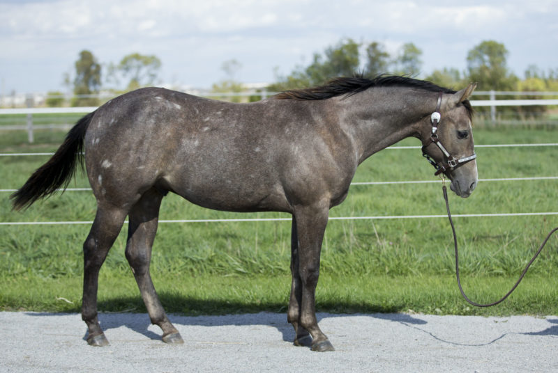 Listomatic - Reining prospect for sale
